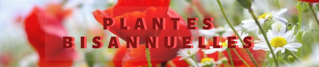 Plantes Bisannuelle