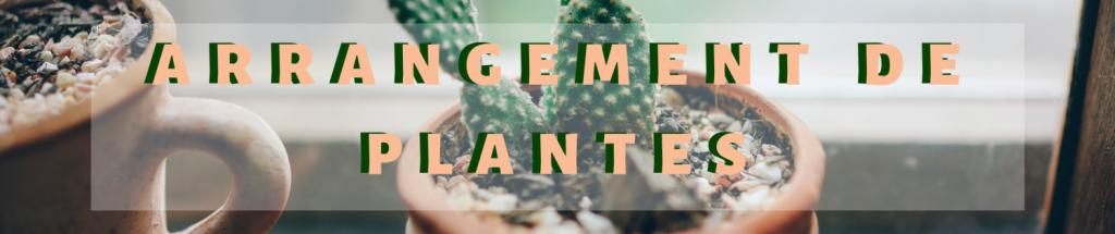 Arrangement plantes