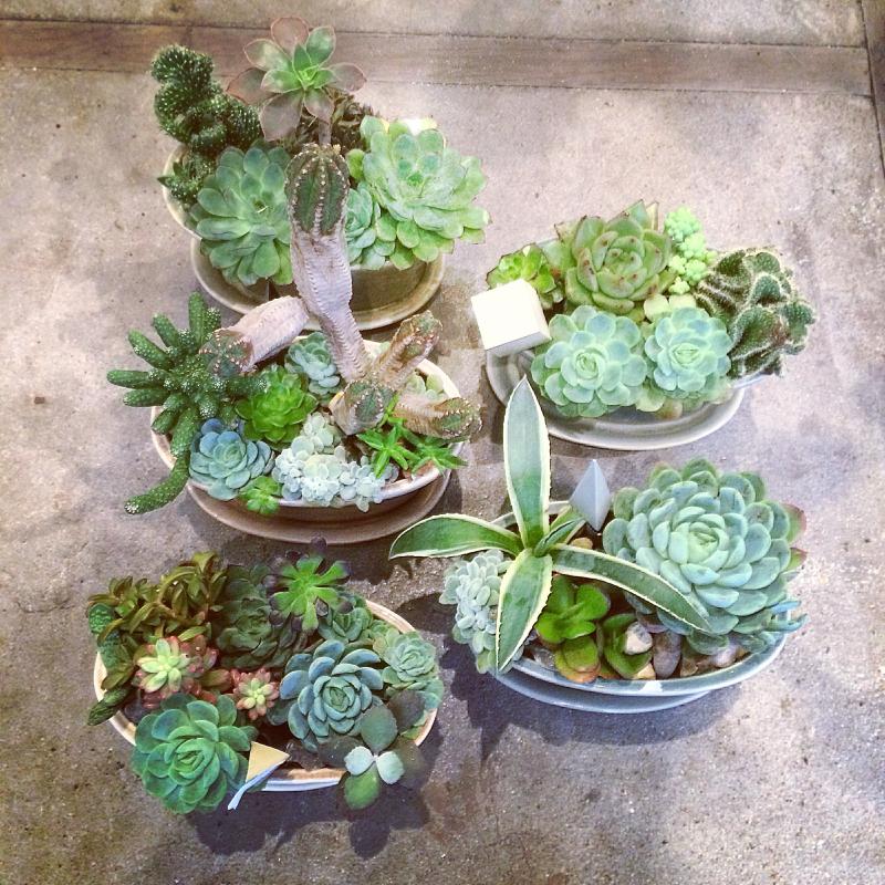 Arrangements de plantes