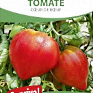 Graines tomate, cœur de bœuf